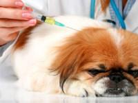 Вакцинопрофилактика собак