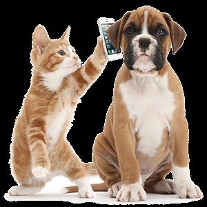 Контакты ветеринарной клиники «Нико-вет»
