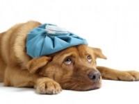 Ветеринарная клиника Нико-вет