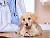 Вакцинация животных, ветеринарная клиника Никовет