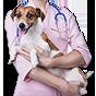 Услуги ветеринарной клиники Нико-вет